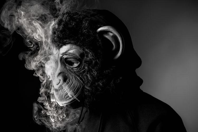 Le Monkey - carton pate records
